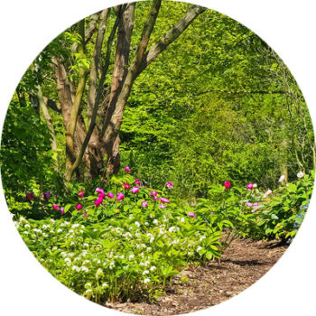 accueil_foret_jardin_circle